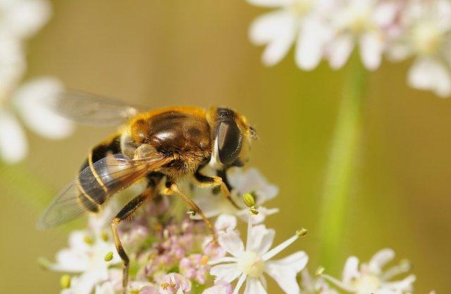 abeille par Jeremy host