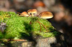 Champignons et lichen par Gewurtz.