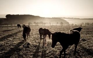 Chevaux au petit matin par Le Disparu.