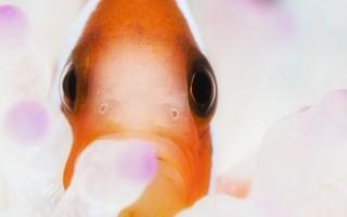 poisson rouge par Le Disparu.